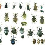 Ekologiczne środki na owady
