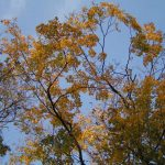 Zwalczanie szkodników w okresie jesiennym